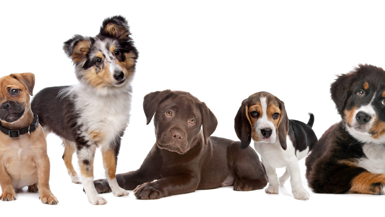 pet friendly why do dogs blank article image