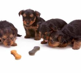 puppies and treats pet friendly article image