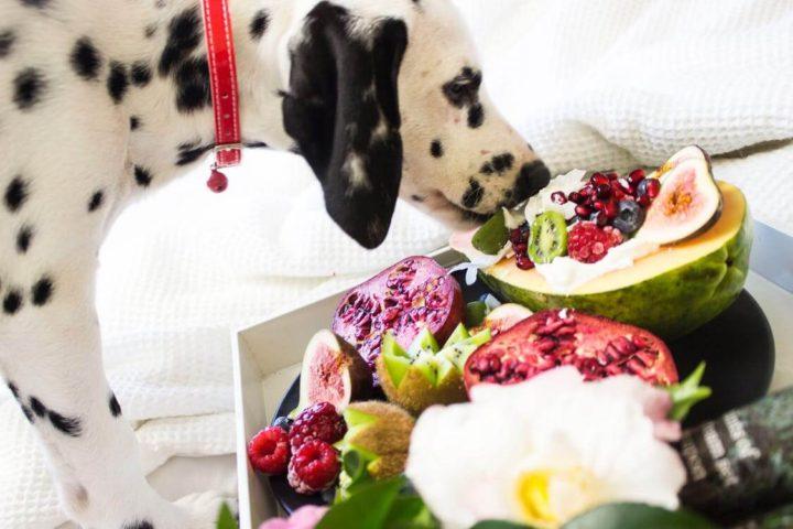 pet food pet friendly article image