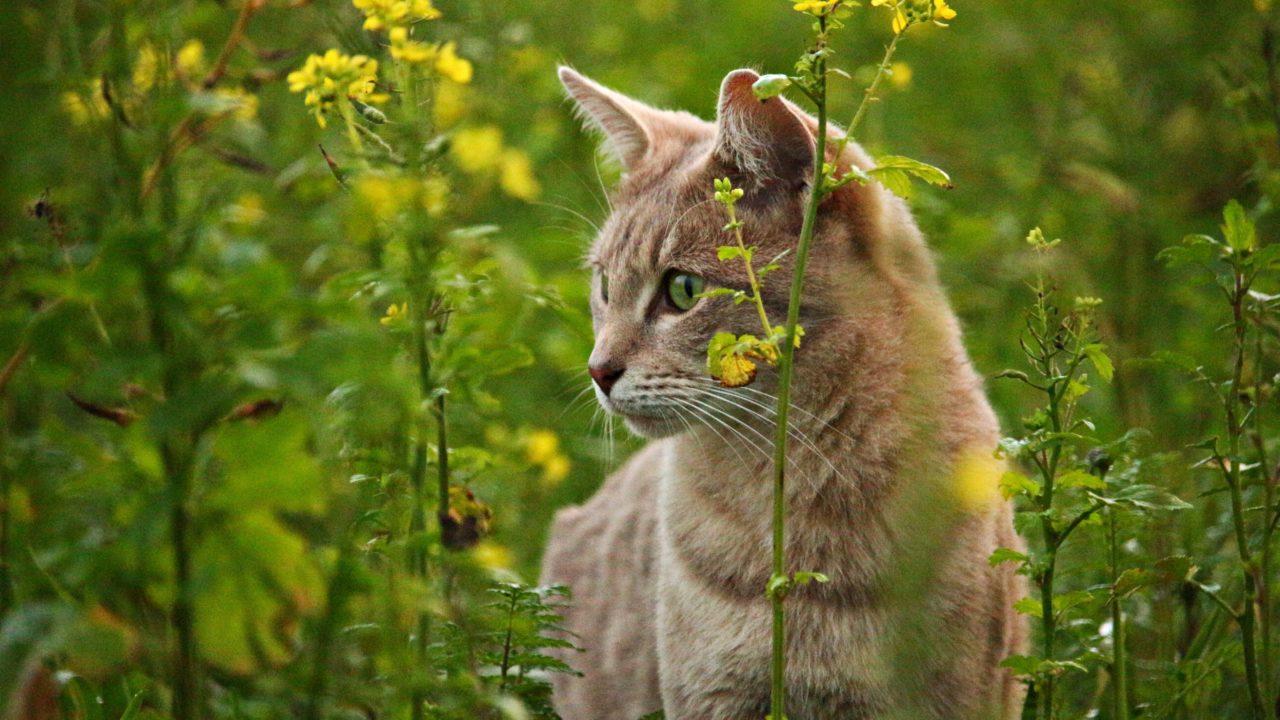outdoor cat pet friendly article image