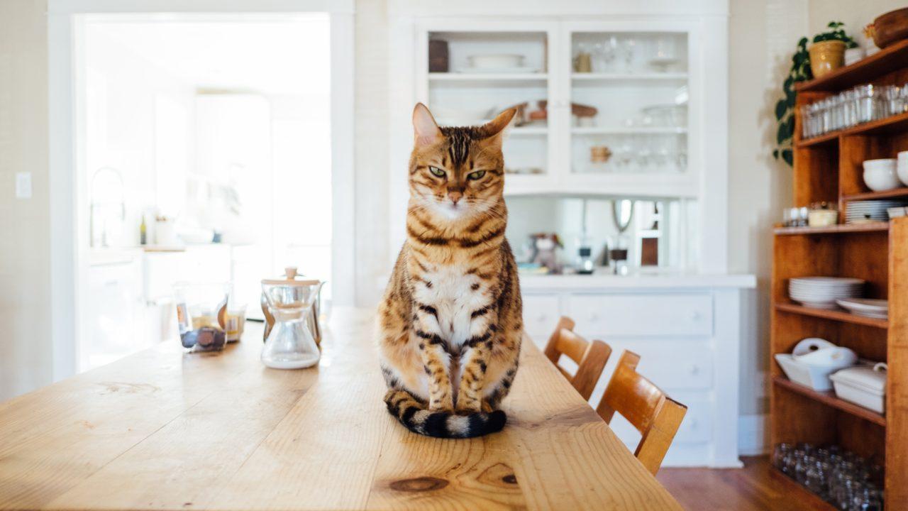 cat in modern home
