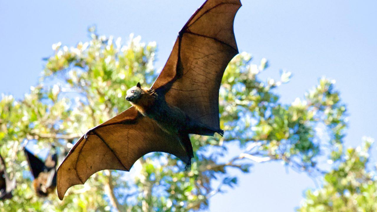 photo of a bat